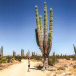 cactus_desert